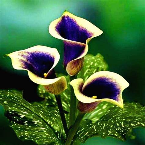 imagenes de rosas hermosas unicas imagenes hermosas fotos lindas y frases bellas imagenes