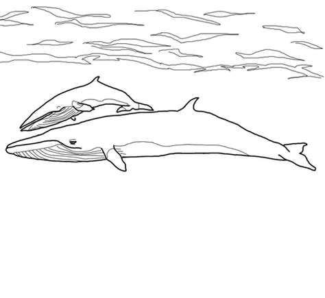 coloring page baby whale 301 moved permanently