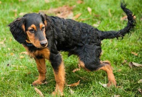 signs of kidney failure in dogs 5 signs of renal disease in dogs petmd
