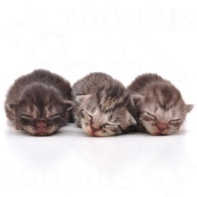 Royal Canin And Baby Cat 400gr Cat Food royal canin babycat milk great deals at zooplus ie
