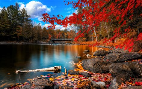 fall landscaping autumn landscape red leaves wallpapers and images