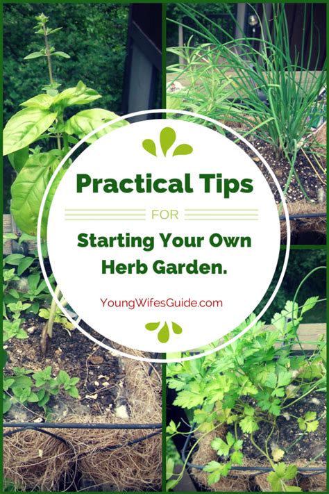 how to start your own herb garden activist awake practical tips for starting your own herb garden young