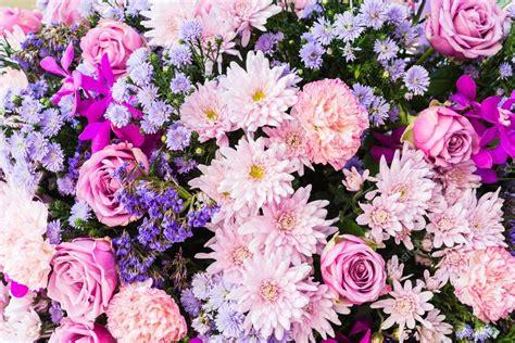 immagini fiori desktop sfondi fiori foto stock 169 mrsiraphol 60863657