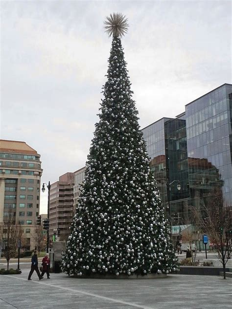 this 70 foot tree will be lit up tomorrow at 6 pm at