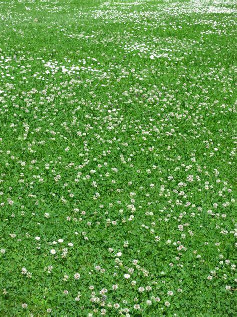 Unkraut Im Rasen Bekämpfen by Unkraut Im Rasen Bek 228 Mpfen 187 Die 10 Besten Tipps