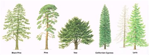 type of tree types of trees medway valley line