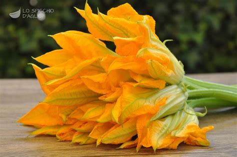 fiori di zucchina ingrediente fiori di zucca le ricette dello spicchio d aglio