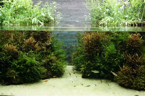 Takashi Amano Aquascaping by The Passing Of Aquascaping Legend Takashi Amano