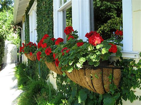 flower window boxes 25 wonderful diy window box planters home design and