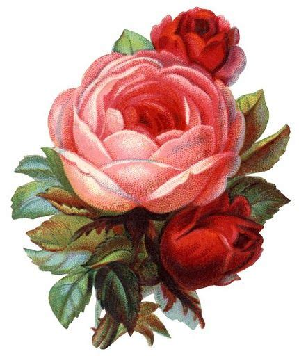 imagenes rosas varias antique passion l 225 minas antiguas vintage retro y