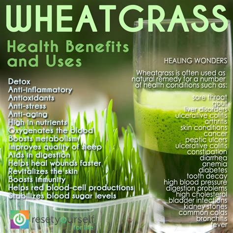 Wheatgrass Detox Benefits by 17 Best Images About Wheatgrass Benefits Facts On