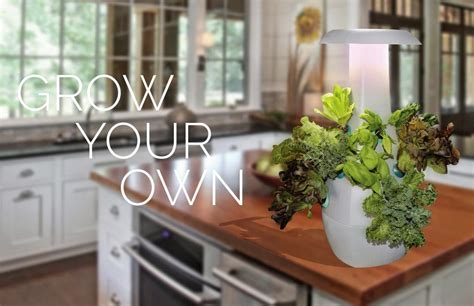 15 best aquaponic gardens for you