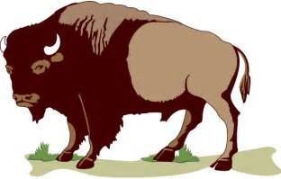buffalo or american bison animal clipart cliparts and