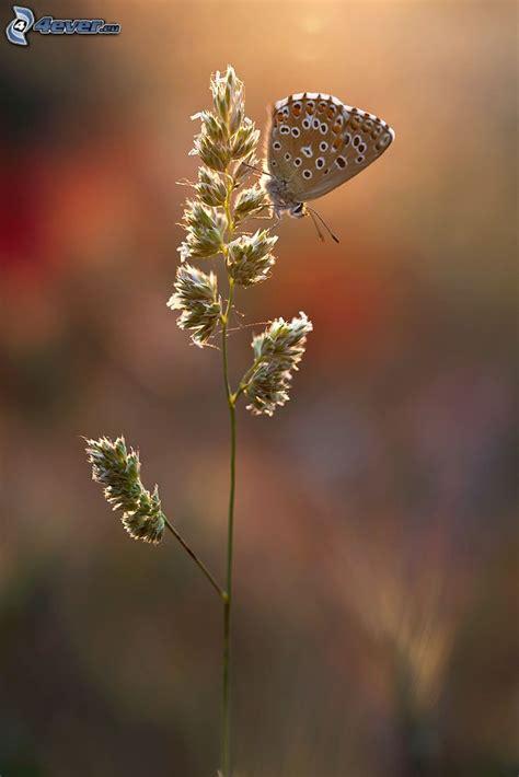 farfalla su fiore farfalla sul fiore