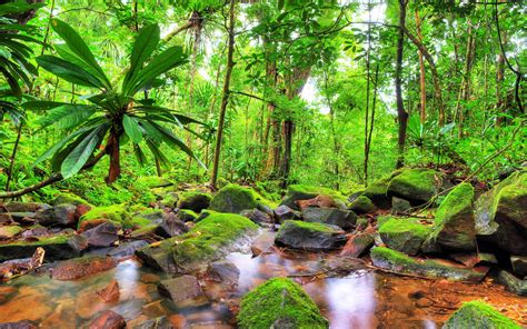 exotic tropical landscape jungle flow stones rocks  green moss green trees vegetation