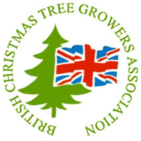 sustainable christmas trees pines and needles