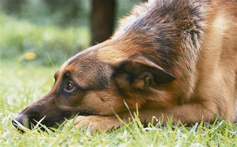 house guard dogs 6 simple ways to protect your rural home when you re miles and miles from police