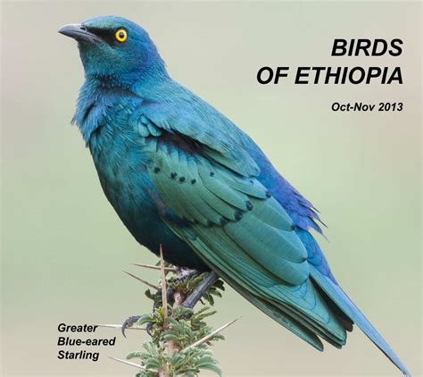 Home Design Magazines Canada by Birds Of Ethiopia By Peter Day Arts Amp Photography Blurb