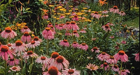 How To Make A Butterfly Garden by How To Make Butterfly Gardens Entomology