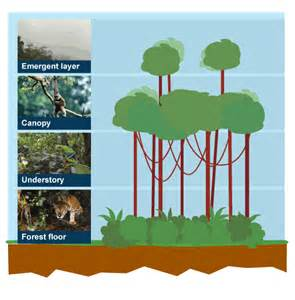 What Does Canopy Mean In Geography by Bbc Ks3 Bitesize Geography Extreme Environments