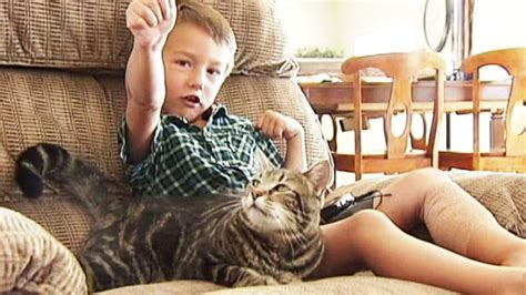 cat saves boy from cat saves boy from being attacked by s abc news