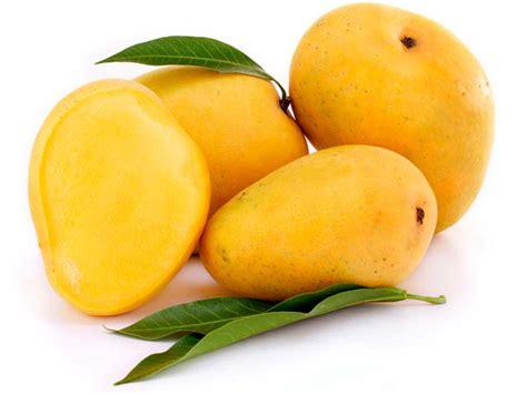 Fruit Mango interesting information about mango tree beabeeinc