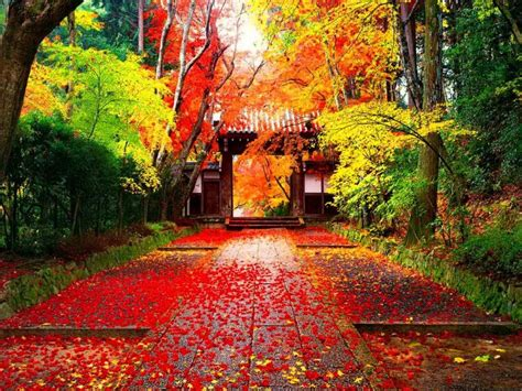plan  perfect holiday  checking  japans