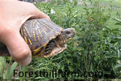 backyard turtle habitat 100 backyard turtle habitat reptiles and amphibians are on the move lake