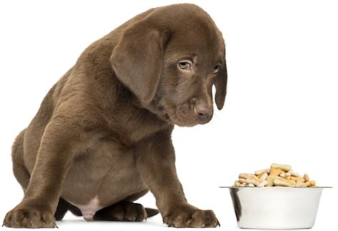 6 week puppy feeding schedule feeding a puppy feeding schedule puppy food