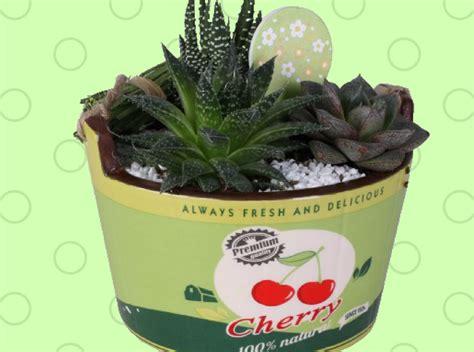 piante grasse in vaso di vetro composizioni di piante grasse in vasi di vetro gp14 pineglen