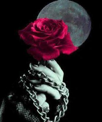 imagenes de flores goticas rosas goticas