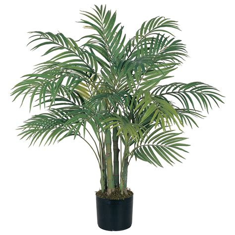 in door plants pot video three four plants argements palm tree in pot palm tree home decor pinterest palm