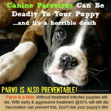 how to cure parvo in a puppy the world s catalog of ideas