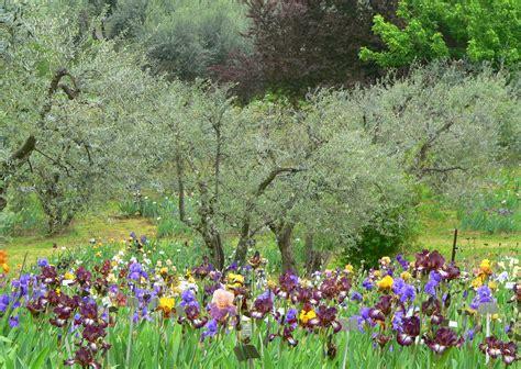 giardino iris firenze come e quando visitare il giardino dell iris di firenze