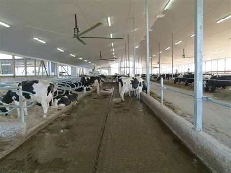 best stall fans dairy housing ventilation options for free stall barns