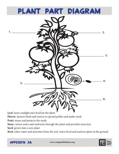 Plant Parts Worksheet by 28 Parts Of A Seed Worksheet Esl Resources New