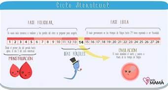 Calendario De Menstruacion Y Dias Fertiles El Ciclo Menstrual Fertilidad Femenina