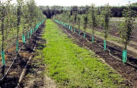 Pom Pom New Series Ii Scarfpashmina visin se planteaza ingrijirea plantatiei
