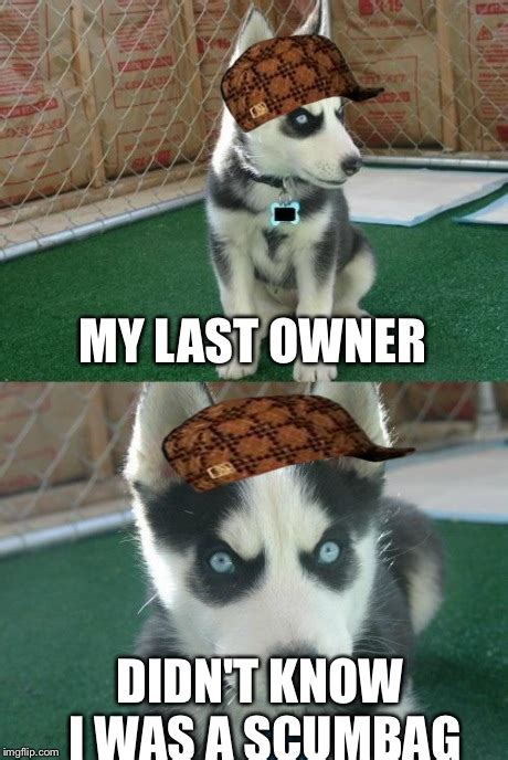 insanity puppy insanity puppy memes imgflip