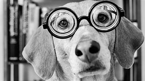 imagenes de vitrales en blanco y negro 191 los perros ven en blanco y negro