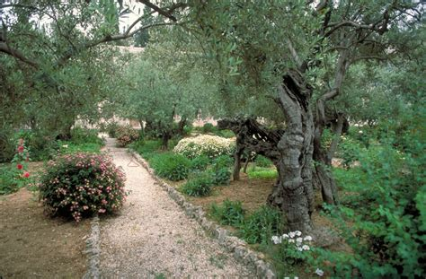 Garden Of Gethsemane Images by Top 10 Christian For An Easter Visit To Israel