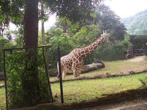 Taman Safari Cisarua whie picture of indonesia safari park cisarua