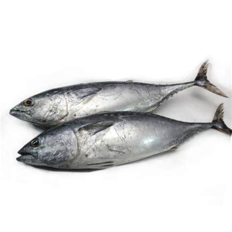 ikan tongkol putih kg pasartani melawati