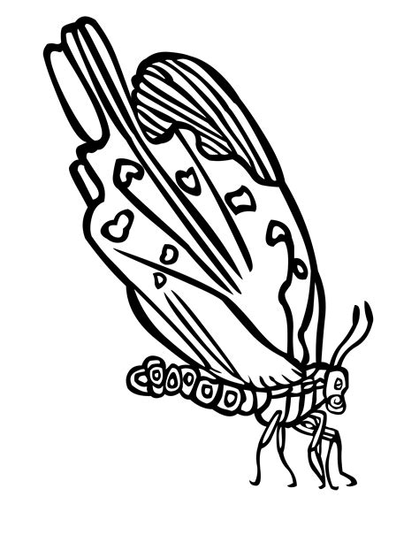 colouring pages butterfly wings wings of a butterfly