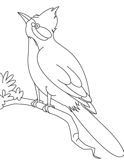 malakiah nightingale s creatures a colouring book by yhon dos santos creepy colouring books i like books a nightingale bird coloring page free