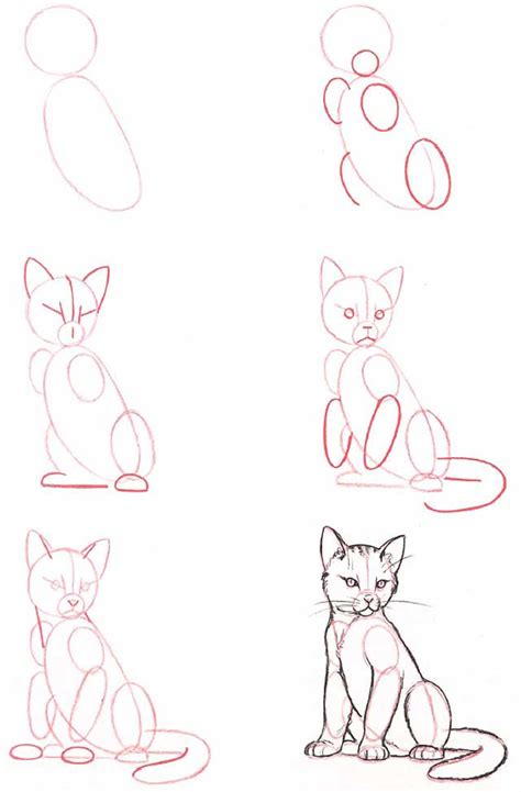 how to draw cat how do you draw a cat and cats gallery