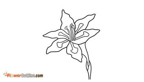 august birth flower outline floweroutline com