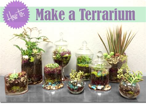 how to make a terrarium and celebrate your earthy side