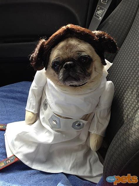 pug in a costume 1000 ideas about pug costumes on pug pugs and kisses and pug