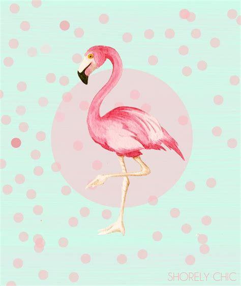 cute flamingos      cute  flamingo